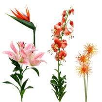 Exotische Blumen