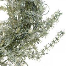 Asparaguskranz künstlich Weiß, Grau Dekokranz Zierspargel Ø20cm