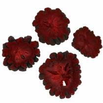 Deko Fruchtscheiben Ata-Frucht Rot 1kg