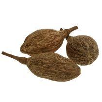 Baobab Frucht geschält 15cm - 20cm Natur 5St