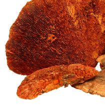 Baumschwamm Orange 1kg