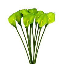Calla künstlich Grün 8cm L57cm 12St