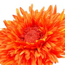 Chrysantheme Teddy 63cm Orange