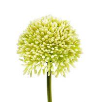 Deko-Allium Creme Ø6,5cm L39cm