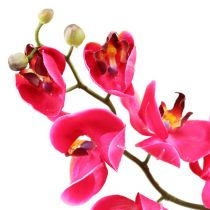 Deko Orchidee in Fuchsia 77cm
