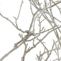 Dry Tree Weiß gewaschen 500g