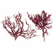 Dekoast Korallenzweig Rot weiß gewaschen 500g