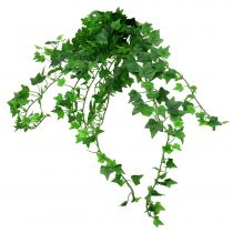 Efeuhänger Grün 60cm