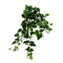 Efeuhänger Weiß-Grün 70cm