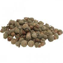 Eicheln zum Dekorieren, Herbstdeko, Herbstfrüchte natürlich Ø1,5 – 2,5cm L1,5 – 3cm 300g