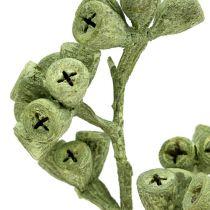 Eukalyptuszweig grün gefrostet 25St