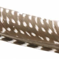 Federn Natur 18 - 24cm 10g