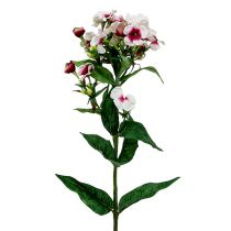 Flammenblume Weiß 72cm