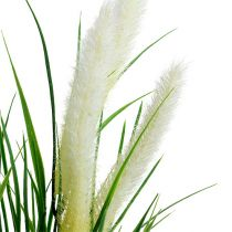 Fuchsschwanzgras Grün, Weiß 63cm
