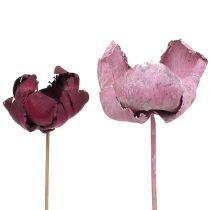 Holzblume, Palm Cup Mix Rosa-Erika 25St
