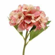 Hortensie Beige/ Rosa 35cm