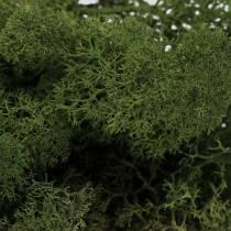 Moos Islandmoos Grün 500g