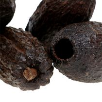 Kakaofrucht Natur 10-18cm 15St