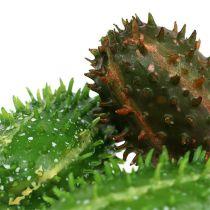 Kaktusfeige 5cm Grün-Braun 6St
