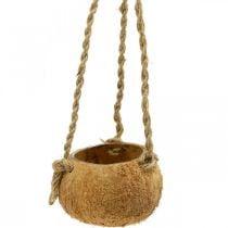 Kokosschale zum Hängen, natürliche Pflanzschale, Blumenampel Ø8cm L55cm