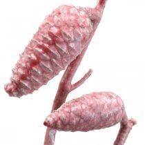 Maritimazapfen am Zweig Rosa/Weiß gewachst 400g