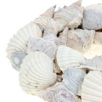 Muschelkranz Weiß Ø14cm