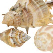 Muschelmix Natur sortiert 260g