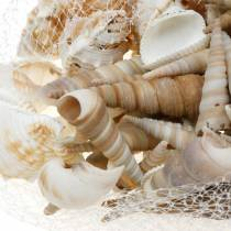 Muschelmix und Schneckenhäuser im Netz Natur 400g
