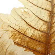 Oak Leaf gebleicht 35St