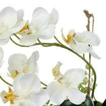 Orchidee Phalaenopsis zum Hängen H26cm Creme