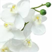 Orchidee Weiß 77cm