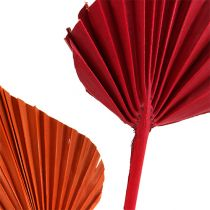 Palmspear mini sort. Rot/Orange 100St