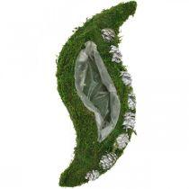 Pflanzgefäß Moos und Zapfen Welle Grün, Weiß gewaschen 41×15cm
