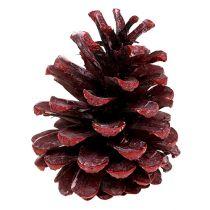 Schwarzkiefer Zapfen Rot gefrostet 5-7cm 1kg