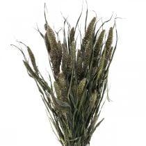 Trockenblumen Setaria Anthrazit Natur Borstenhirse Bund 100g