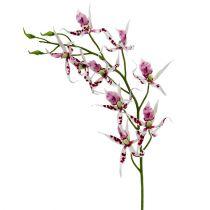 Spinnenorchideen Brassia Pink-Weiß 108cm 3St