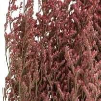 Strandflieder Pink Trockenfloristik Statice tatarica 100g