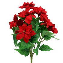 Strauß Weihnachtsstern Rot L47cm