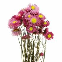 Strohblume im Bund Pink Trockenblumen 25g