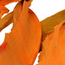 Strelitzienblätter Orange 120cm 20St