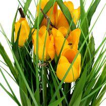 Tulpen im Topf Gelb 30cm