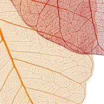 Willow Skeletton orange/rot 200St.