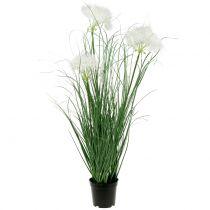 Ziergras mit weißen Samen Grün H73cm