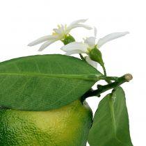 Zitronen mit Blüte 9,5cm Grün 4St