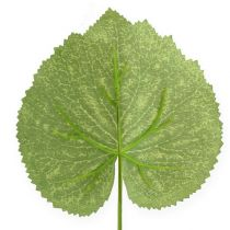 Deko-Pflanzenblätter Galax B10cm L22cm 24St