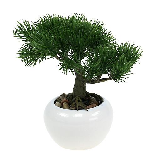 bonsaibaum im topf 19cm 1st einkaufen in sterreich. Black Bedroom Furniture Sets. Home Design Ideas