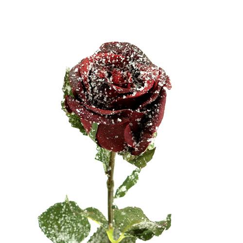 deko rose rot beschneit 6cm 6st einkaufen in sterreich. Black Bedroom Furniture Sets. Home Design Ideas