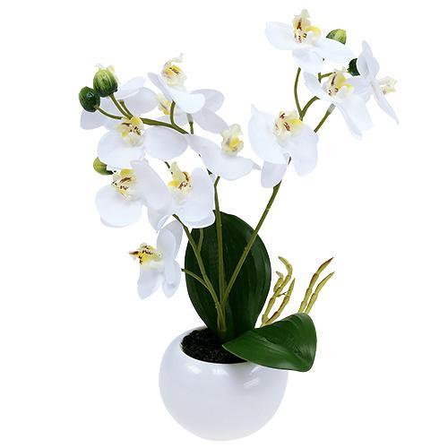 orchideen im topf 30cm wei einkaufen in sterreich. Black Bedroom Furniture Sets. Home Design Ideas