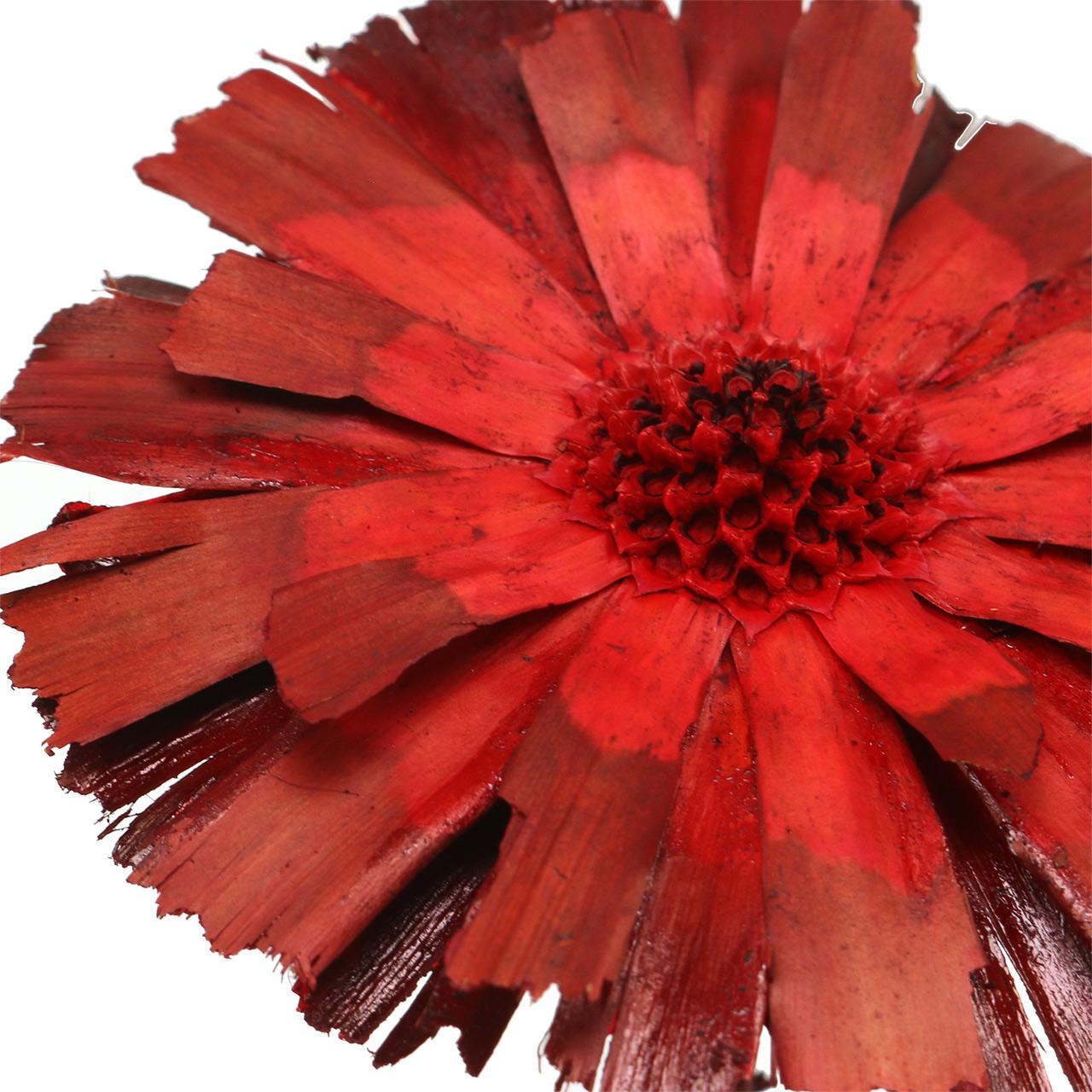 Repens Rosette Rot 8cm - 9cm 25St