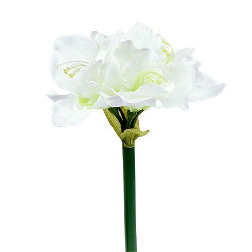 Amaryllis Blume Weiss L 73cm 2st Einkaufen In Osterreich